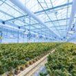 Should You Grow Cannabis Inside or Outside?