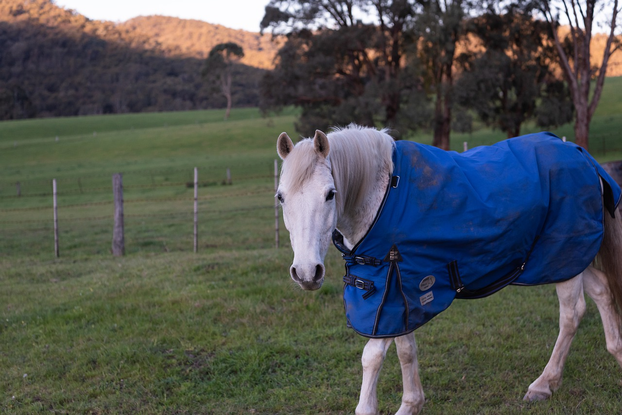 Best Horse Rug Fits